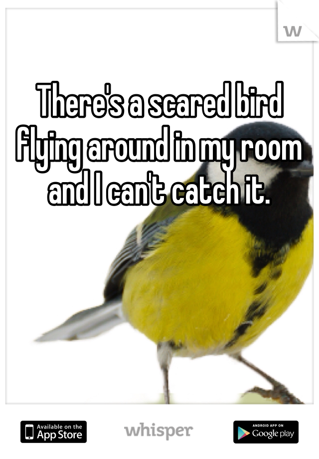 There's a scared bird flying around in my room and I can't catch it.