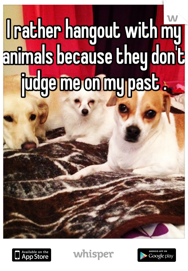 I rather hangout with my animals because they don't judge me on my past .
