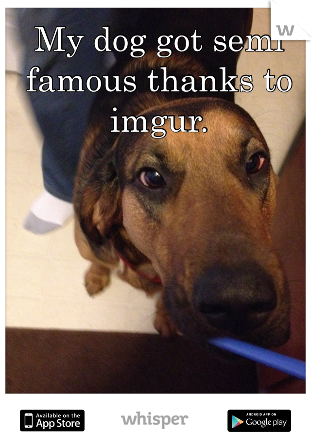 My dog got semi famous thanks to imgur.