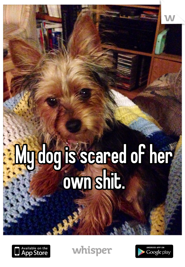 My dog is scared of her own shit.