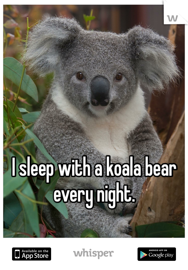 I sleep with a koala bear every night.