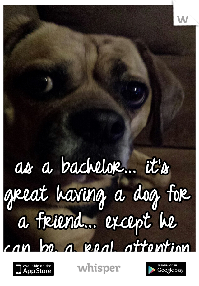 as a bachelor... it's great having a dog for a friend... except he can be a real attention whore lol