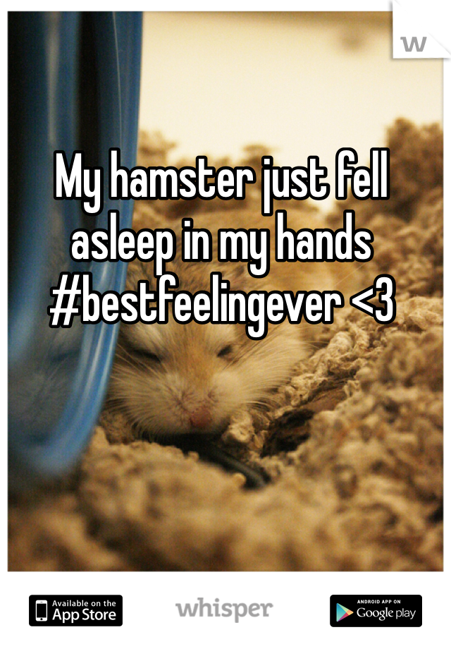 My hamster just fell asleep in my hands #bestfeelingever <3