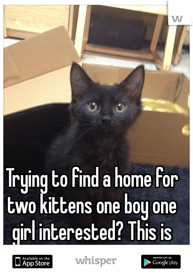 Trying to find a home for two kittens one boy one girl interested? This is the boy