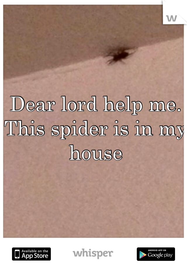 Dear lord help me.  This spider is in my house
