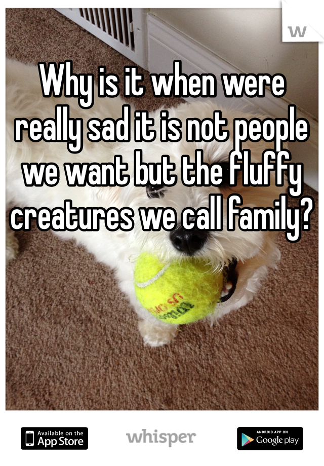 Why is it when were really sad it is not people we want but the fluffy creatures we call family?