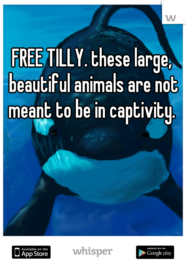 FREE TILLY. these large, beautiful animals are not meant to be in captivity.