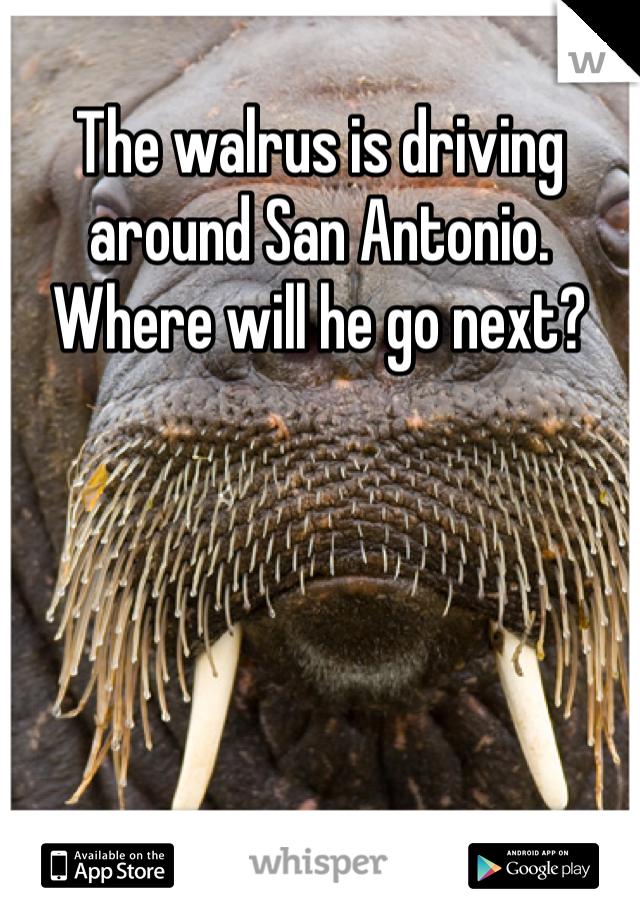 The walrus is driving around San Antonio. Where will he go next?