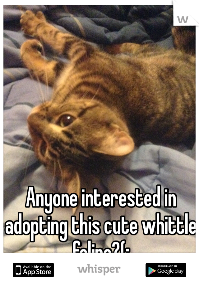 Anyone interested in adopting this cute whittle feline?(: