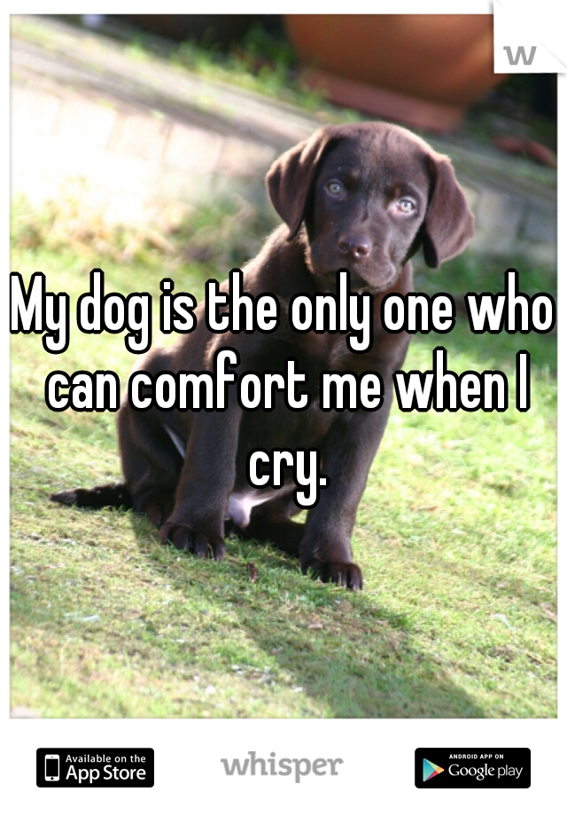 My dog is the only one who can comfort me when I cry.