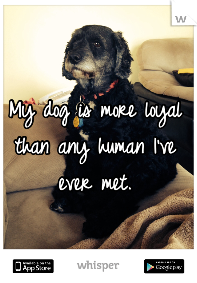 My dog is more loyal than any human I've ever met.