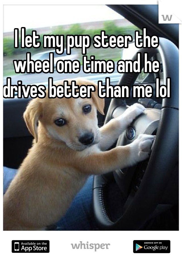 I let my pup steer the wheel one time and he drives better than me lol