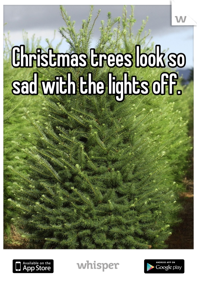 Christmas trees look so sad with the lights off.