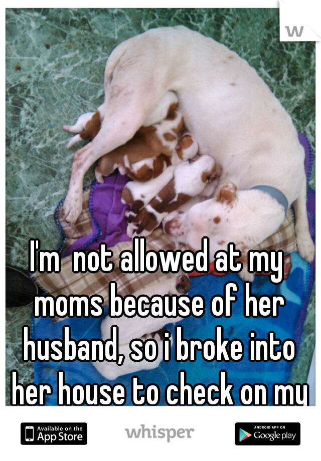 I'm  not allowed at my moms because of her husband, so i broke into her house to check on my puppies.