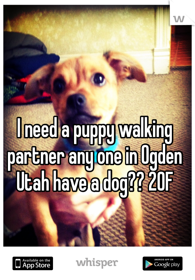 I need a puppy walking partner any one in Ogden Utah have a dog?? 20F