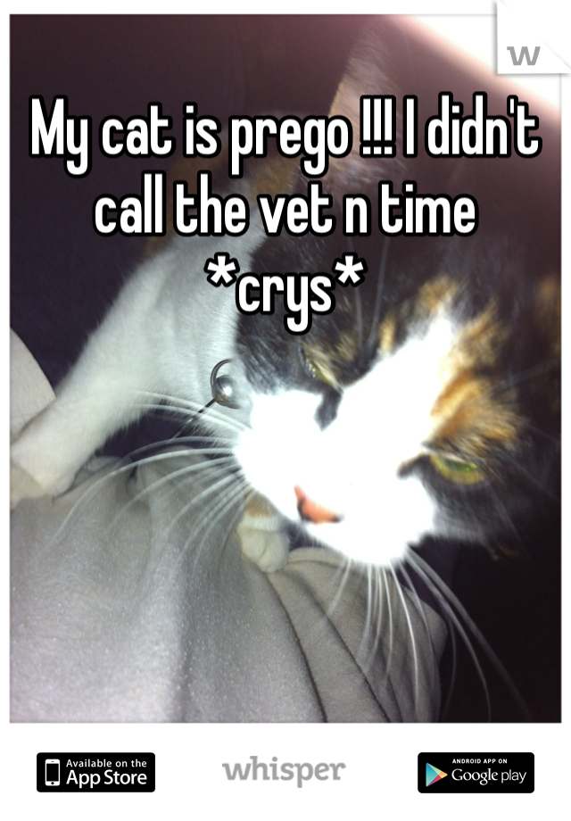 My cat is prego !!! I didn't call the vet n time *crys*