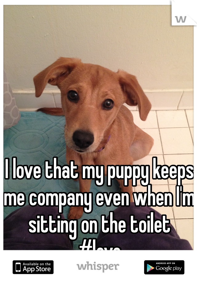 I love that my puppy keeps me company even when I'm sitting on the toilet  #love
