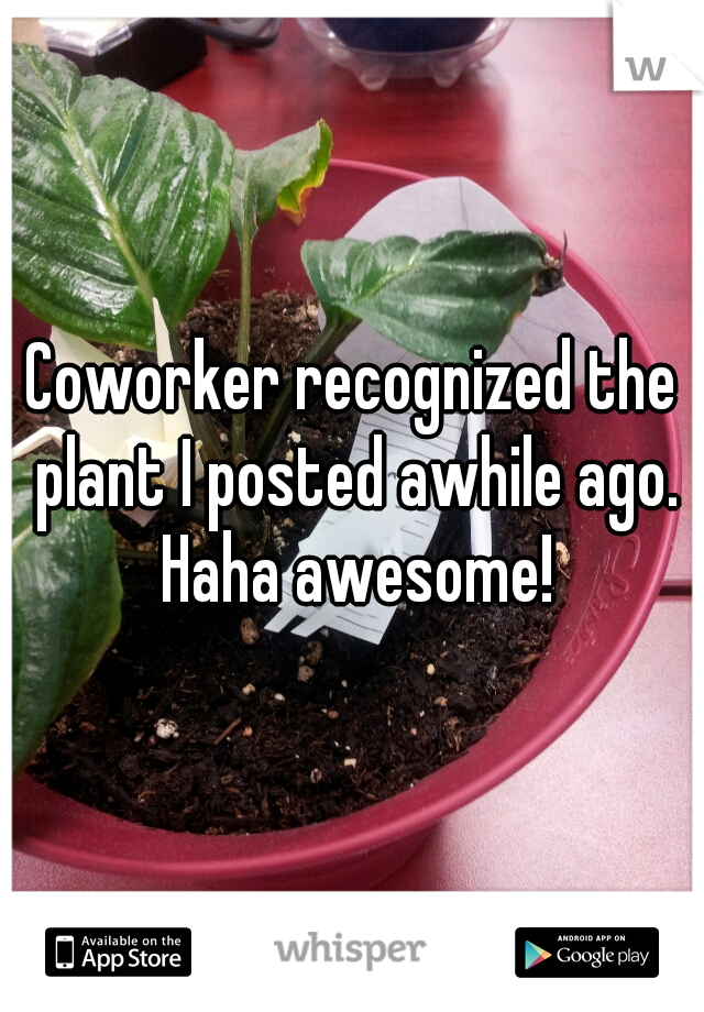 Coworker recognized the plant I posted awhile ago. Haha awesome!