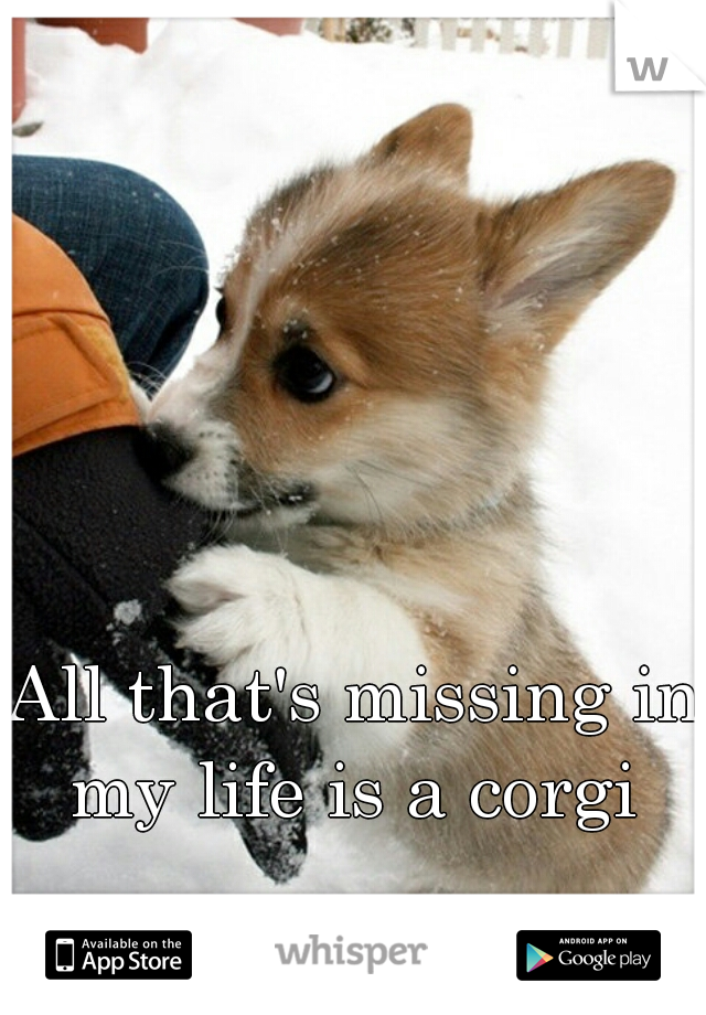 All that's missing in my life is a corgi