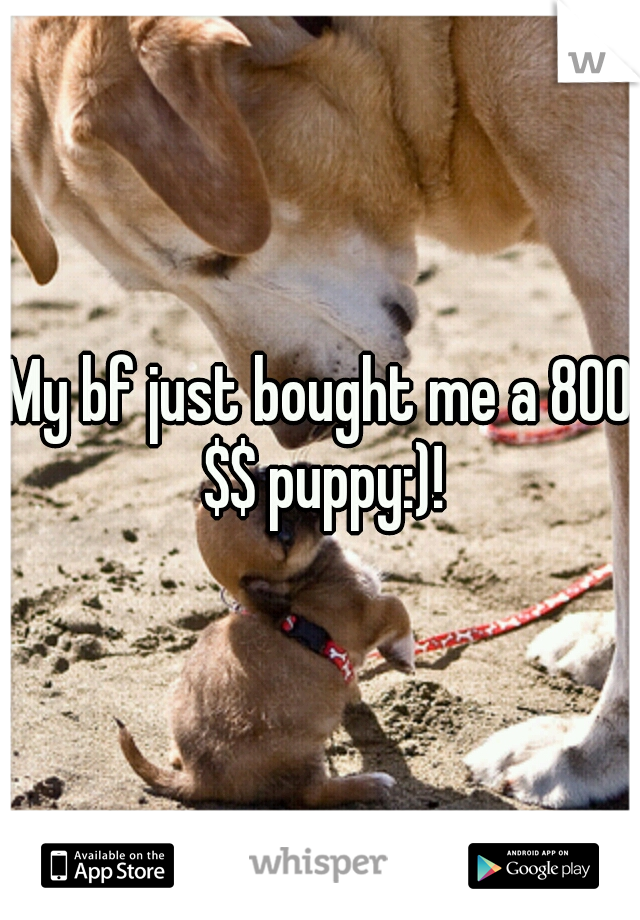 My bf just bought me a 800 $$ puppy:)!