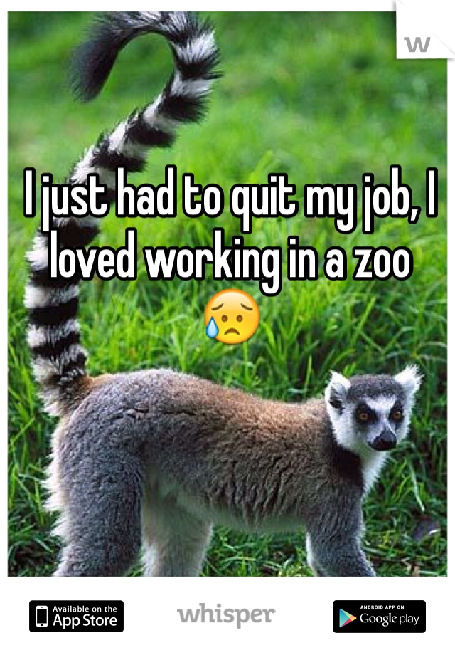 I just had to quit my job, I loved working in a zoo 😥