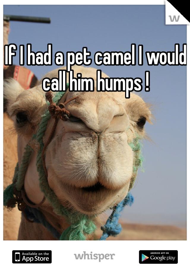 If I had a pet camel I would call him humps !