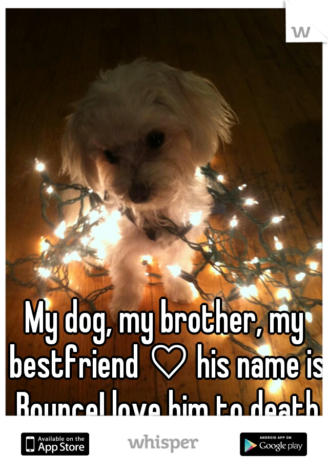 My dog, my brother, my bestfriend ♡ his name is Bounce! love him to death