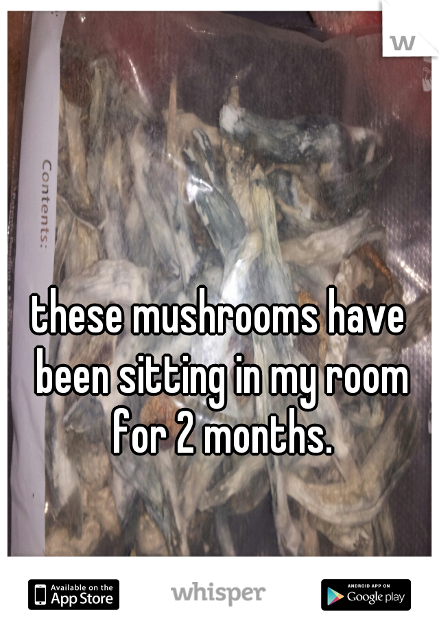 these mushrooms have been sitting in my room for 2 months.
