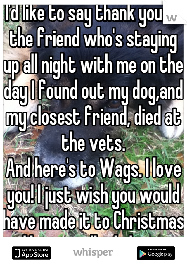 I'd like to say thank you to the friend who's staying up all night with me on the day I found out my dog,and my closest friend, died at the vets.  And here's to Wags. I love you! I just wish you would have made it to Christmas like we talked about.