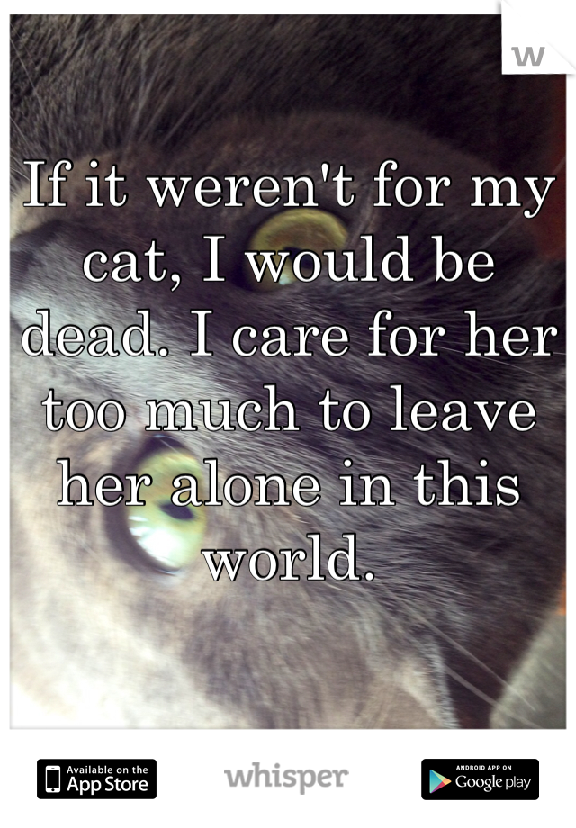 If it weren't for my cat, I would be dead. I care for her too much to leave her alone in this world.