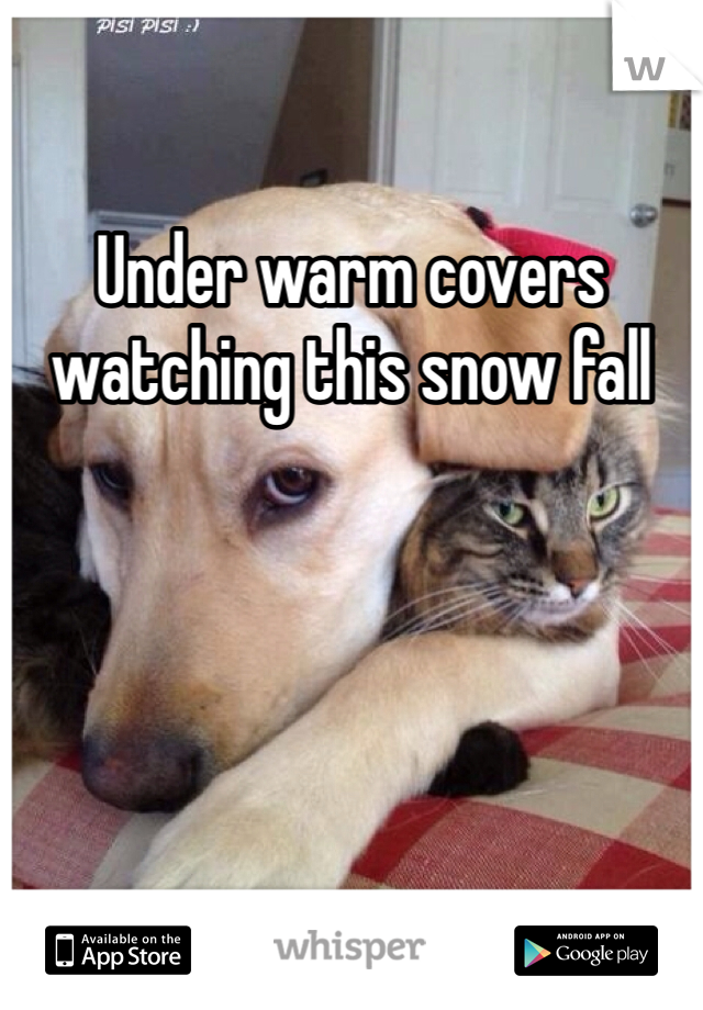 Under warm covers watching this snow fall