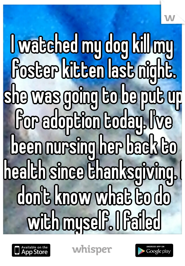 I watched my dog kill my foster kitten last night. she was going to be put up for adoption today. I've been nursing her back to health since thanksgiving. I don't know what to do with myself. I failed