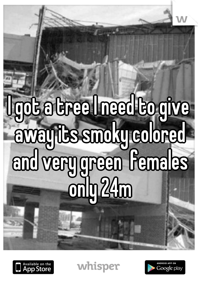 I got a tree I need to give away its smoky colored and very green  females only 24m