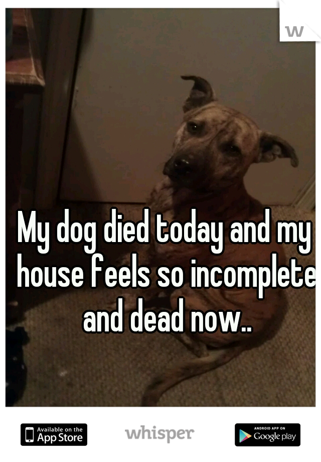 My dog died today and my house feels so incomplete and dead now..