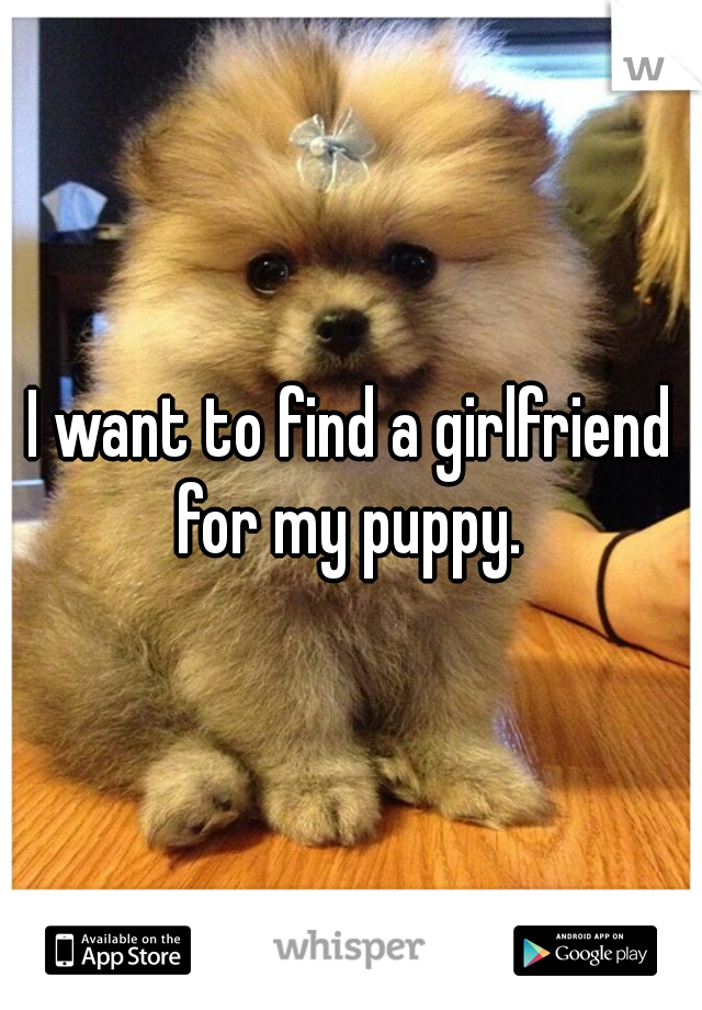 I want to find a girlfriend for my puppy.