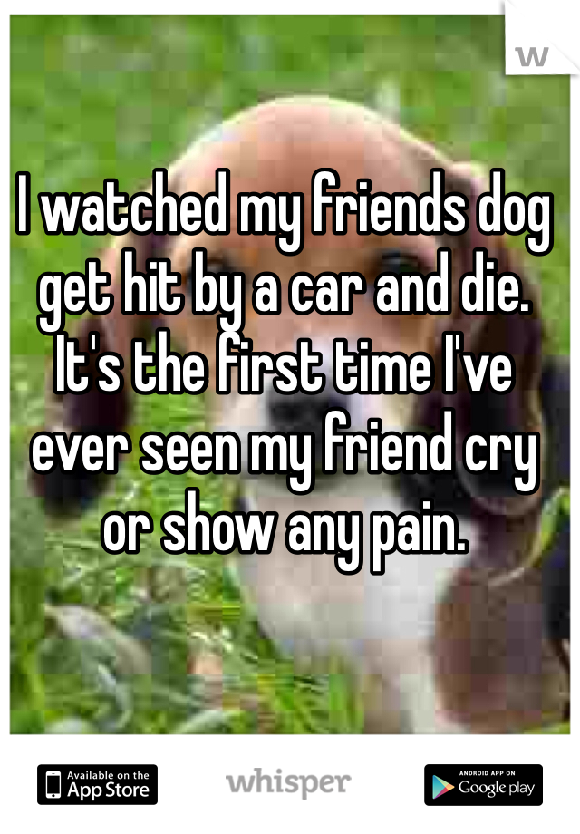I watched my friends dog get hit by a car and die. It's the first time I've ever seen my friend cry or show any pain.