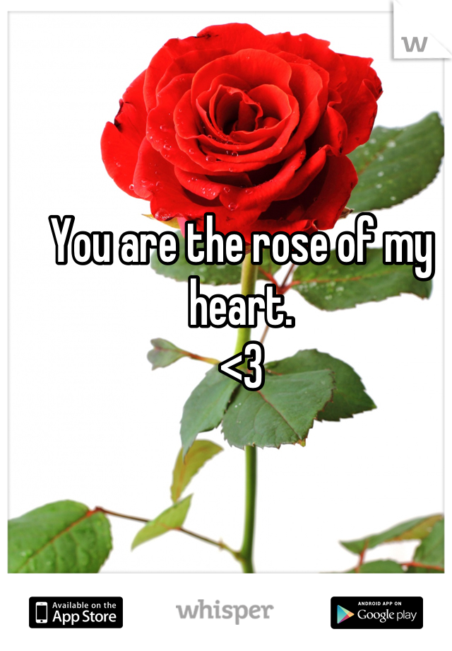 You are the rose of my heart.  <3