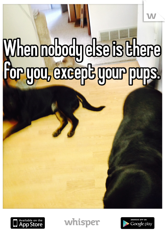 When nobody else is there for you, except your pups.