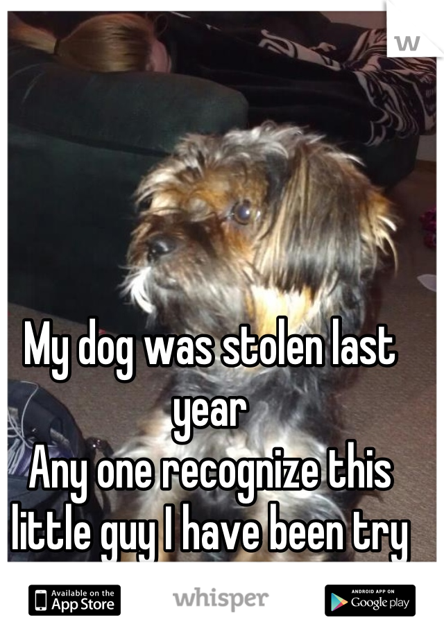 My dog was stolen last year Any one recognize this little guy I have been try to locate him forever