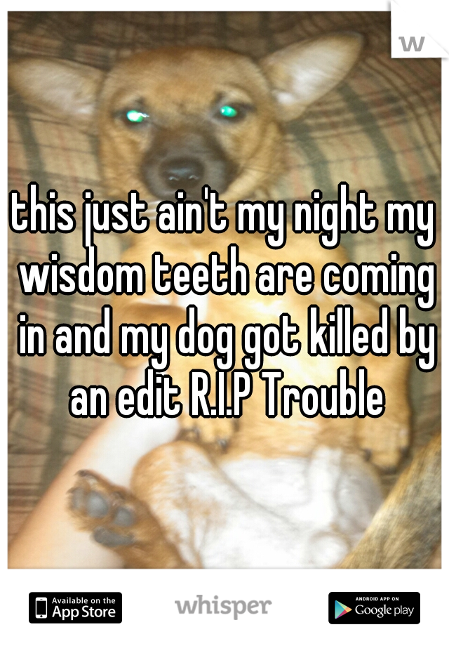 this just ain't my night my wisdom teeth are coming in and my dog got killed by an edit R.I.P Trouble