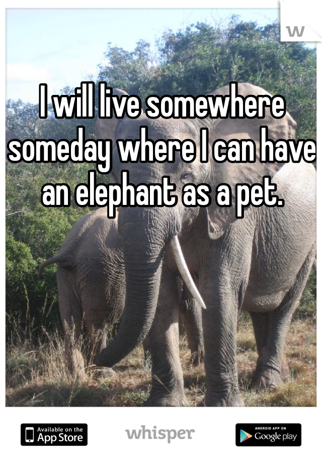I will live somewhere someday where I can have an elephant as a pet.