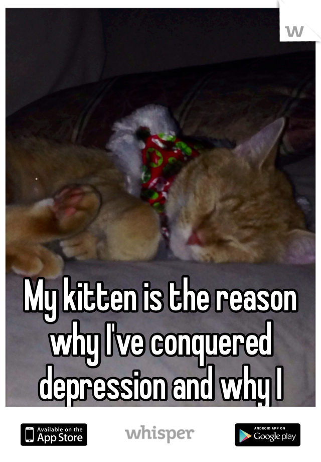 My kitten is the reason why I've conquered depression and why I choose to stay alive.