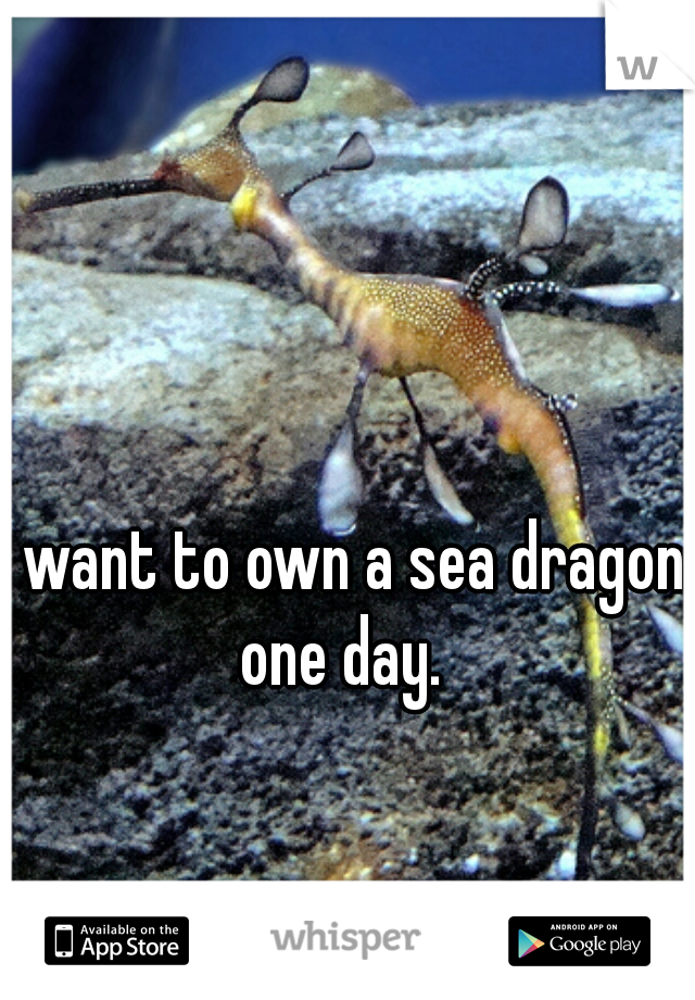 I want to own a sea dragon one day.