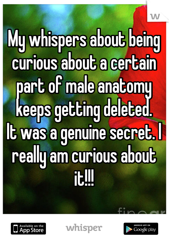 My whispers about being curious about a certain part of male anatomy keeps getting deleted.  It was a genuine secret. I really am curious about it!!!