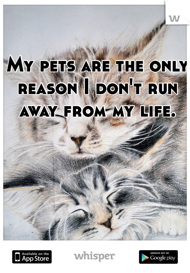 My pets are the only reason I don't run away from my life.