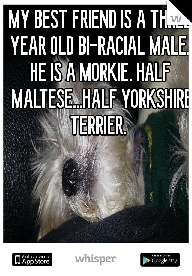 MY BEST FRIEND IS A THREE YEAR OLD BI-RACIAL MALE.                  HE IS A MORKIE. HALF MALTESE...HALF YORKSHIRE TERRIER.