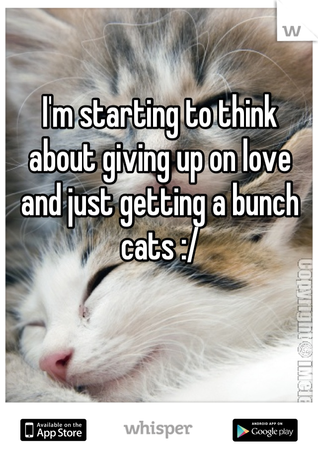 I'm starting to think about giving up on love and just getting a bunch cats :/