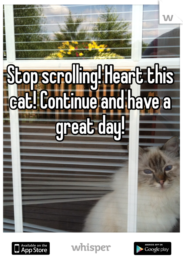 Stop scrolling! Heart this cat! Continue and have a great day!