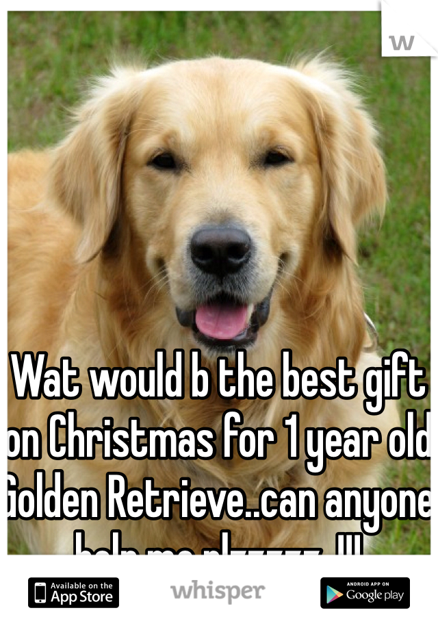 Wat would b the best gift on Christmas for 1 year old Golden Retrieve..can anyone help me plzzzzz..!!!
