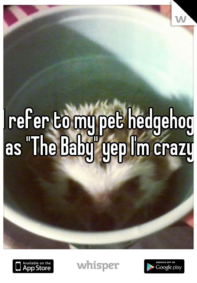 """I refer to my pet hedgehog as """"The Baby"""" yep I'm crazy!"""